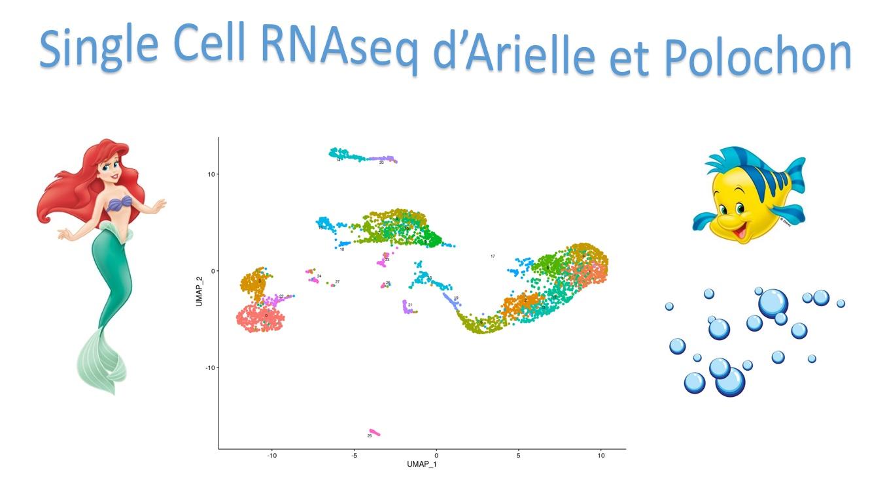 28 - Single Cell RNAseq d'Arielle et Polochon